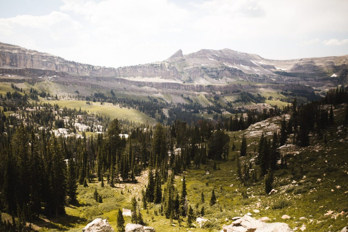 view over forest basin in wyoming
